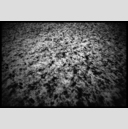 Frank Titze, Ulm/Germany - No. 940 : BW I - Snow on Green - 947x640 Pixel - 415 kB