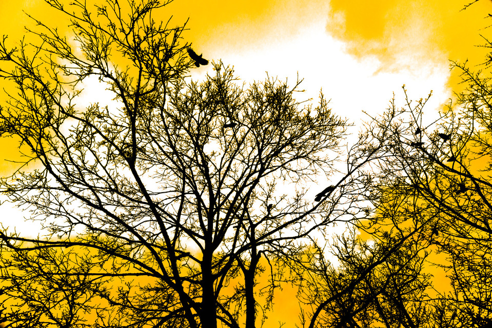 Frank Titze, Ulm/Germany - No. 1008 : Places - Trees with Raven - 959x640 Pixel - 653 kB
