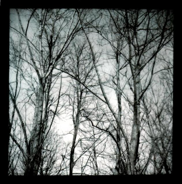 Frank Titze, Ulm/Germany - No. 103 : Trees I - Trees without Leaves - 631x640 Pixel - 88 kB