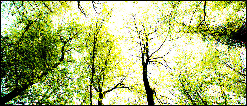 Frank Titze, Ulm/Germany - No. 164 : Trees I - Green Trees - 960x413 Pixel - 513 kB