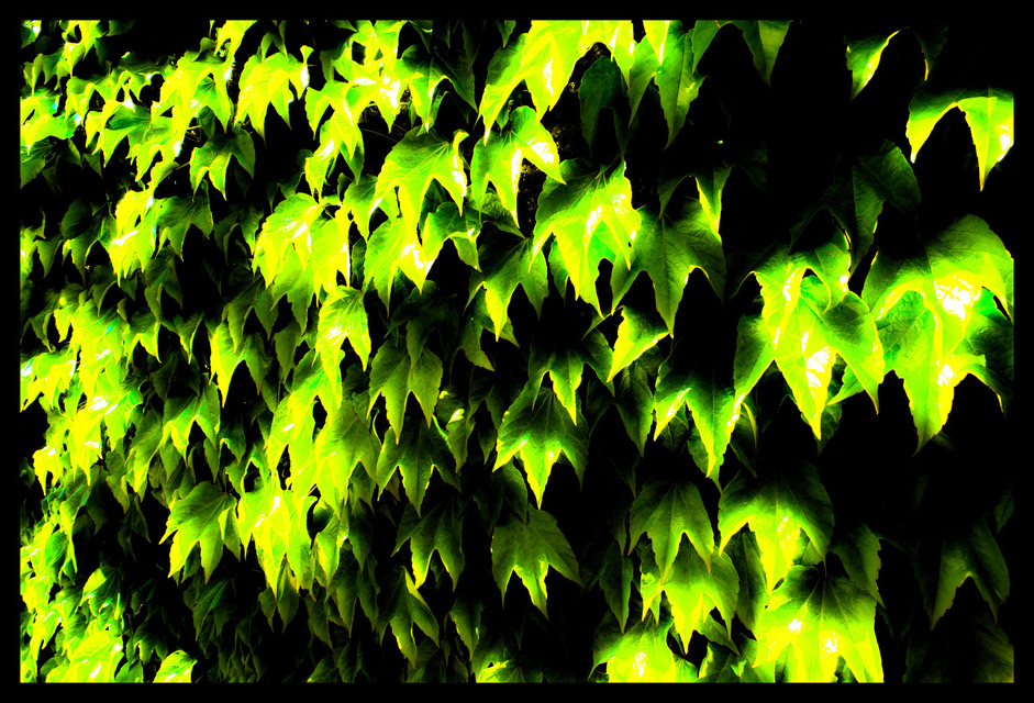 Frank Titze, Ulm/Germany - No. 217 : Non Common I - Green Leaves - 941x640 Pixel - 362 kB
