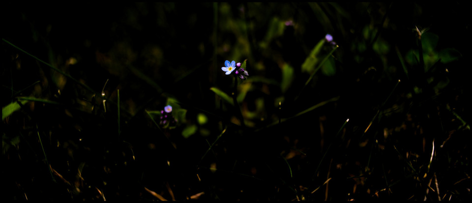 Frank Titze, Ulm/Germany - No. 250 : Flowers - Light in the Dark - 960x413 Pixel - 68 kB