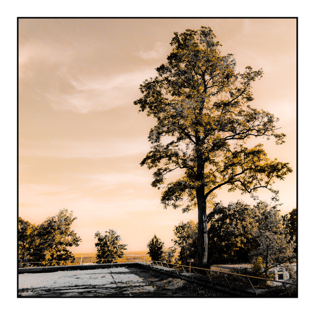 Frank Titze, Ulm/Germany - No. 415 : Ulm West - Tree at HFG - 640x640 Pixel - 212 kB