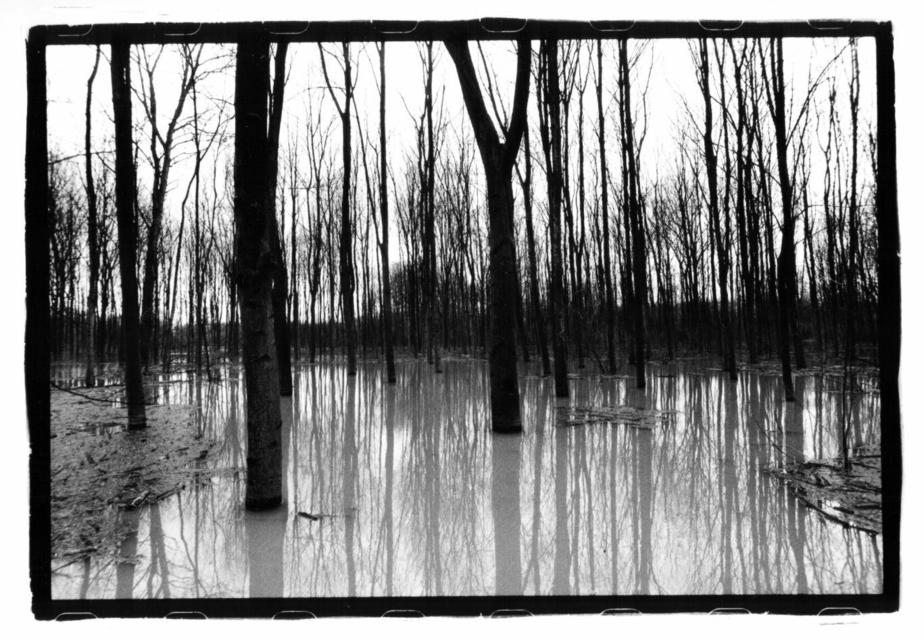 Frank Titze, Ulm/Germany - No. 45 : Trees I - Forest under Water - 924x640 Pixel - 115 kB