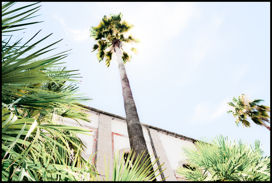 Frank Titze, Ulm/Germany - No. 5330 : Square 1:1 V - Palms - ImageWidth : --- xImageHeight : ---  Pixel - 619 kB