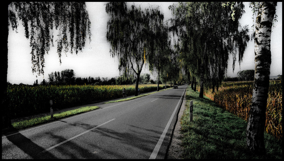 Frank Titze, Ulm/Germany - No. 624 : Trees I - Alley I - 960x546 Pixel - 272 kB