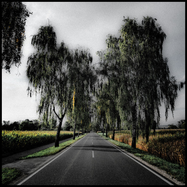 Frank Titze, Ulm/Germany - No. 625 : Trees I - Alley II - 640x640 Pixel - 214 kB