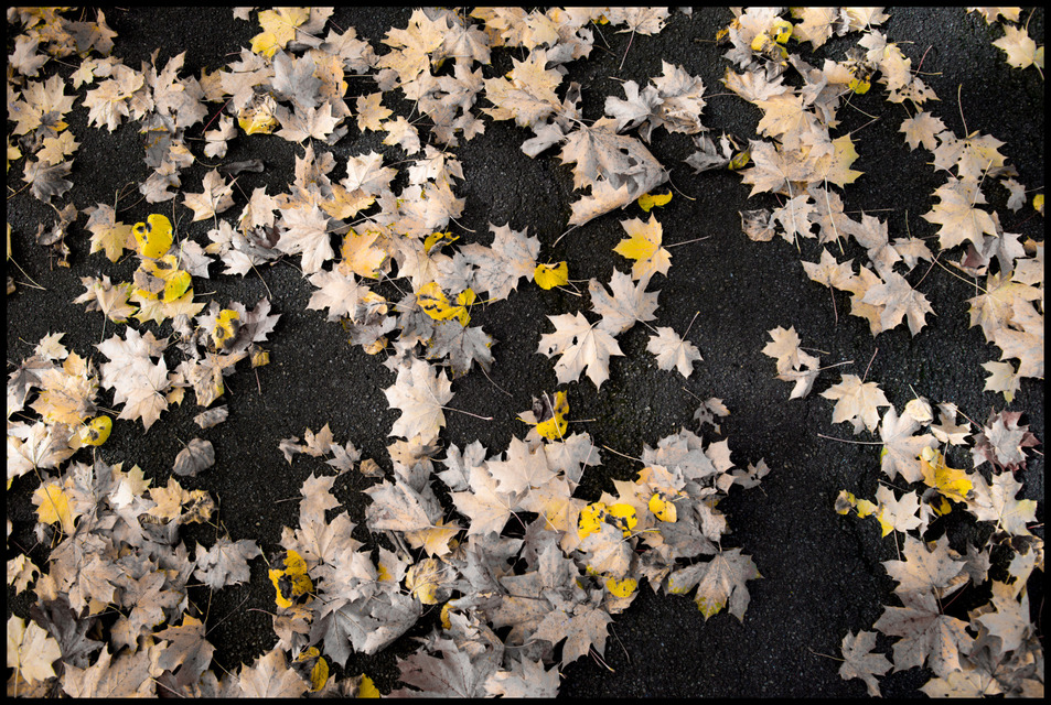 Frank Titze, Ulm/Germany - No. 668 : Others I - Leaves on Ground II - 953x640 Pixel - 421 kB