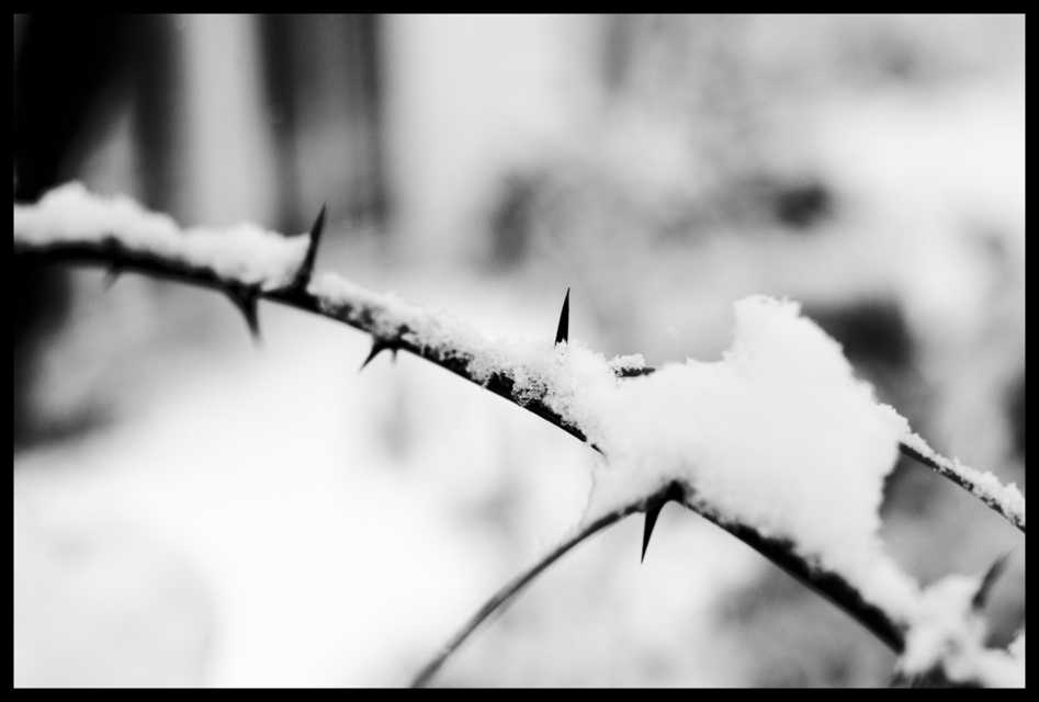 Frank Titze, Ulm/Germany - No. 691 : Others I - First Snow VIII - 947x640 Pixel - 158 kB