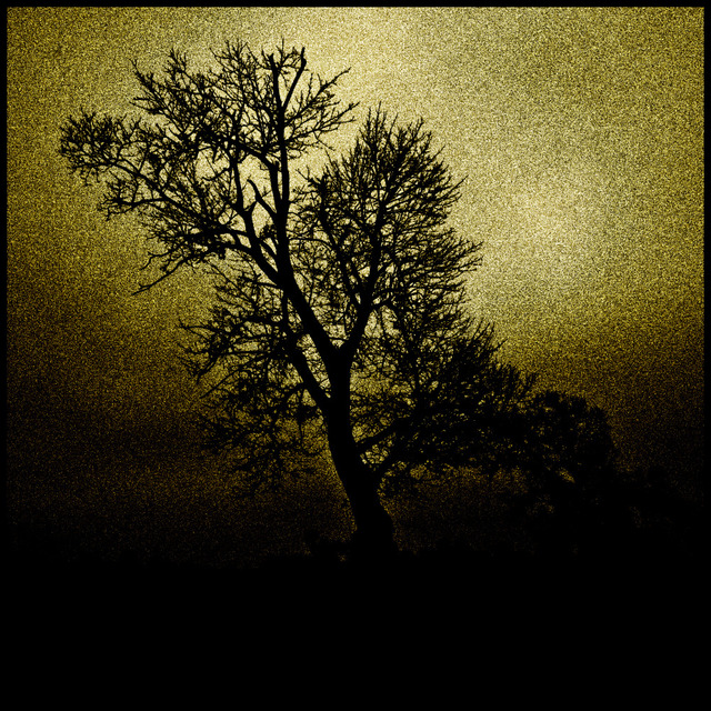 Frank Titze, Ulm/Germany - No. 716 : Trees I - Tree without Leaves - 640x640 Pixel - 273 kB