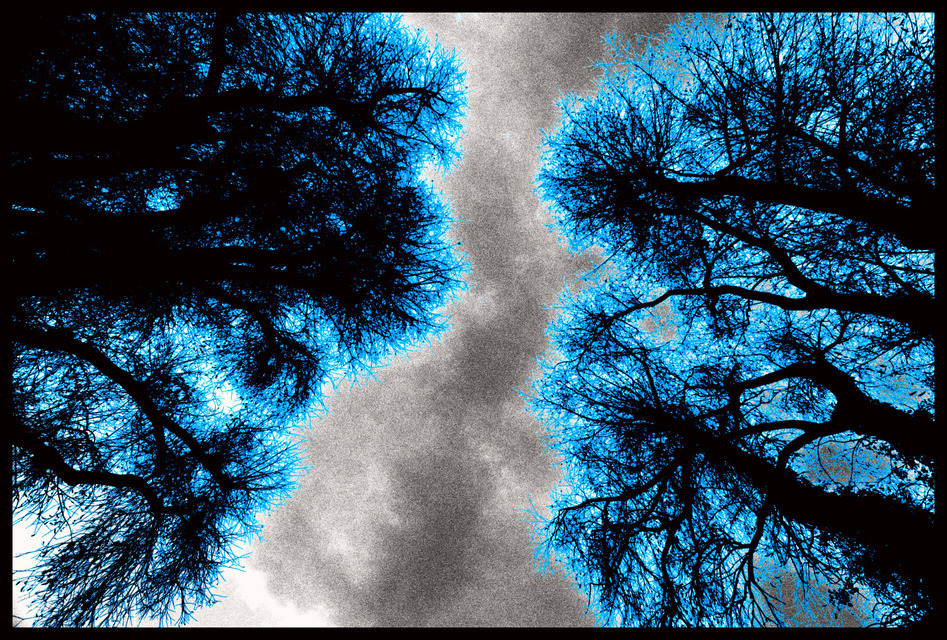 Frank Titze, Ulm/Germany - No. 766 : Trees I - Brothers in Blue - 947x640 Pixel - 603 kB