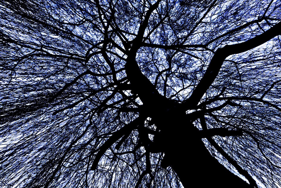 Frank Titze, Ulm/Germany - No. 772 : Trees I - Black on White with Blue - 959x640 Pixel - 629 kB