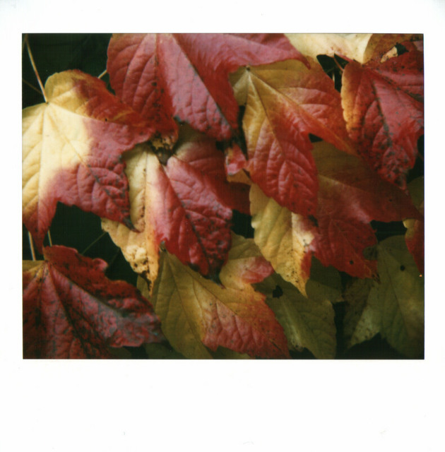 Frank Titze, Ulm/Germany - No. 12 : Square 1:1 I - Colored Leaves - 630x640 Pixel - 97 kB