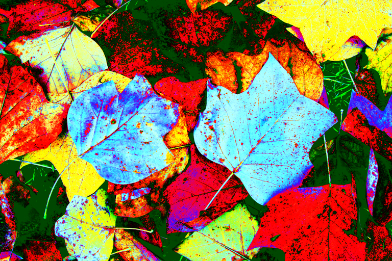 Frank Titze, Ulm/Germany - No. 1917 : Y 2014-03 - Colored Autumn - 959x640 Pixel - 1282 kB