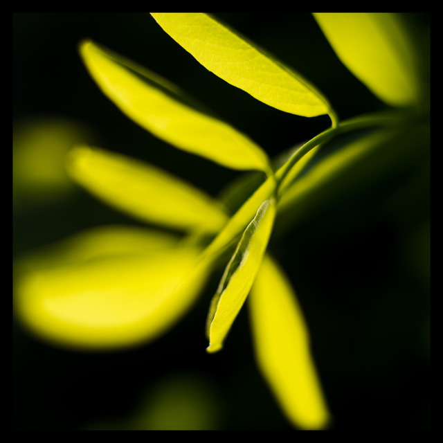 Frank Titze, Ulm/Germany - No. 205 : Y 2012-07 - Leaves in the Sun - 640x640 Pixel - 79 kB