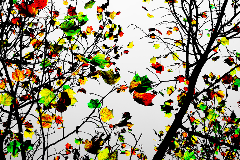 Frank Titze, Ulm/Germany - No. 2670 : Trees II - Colored Leaves - 959x640 Pixel - 801 kB