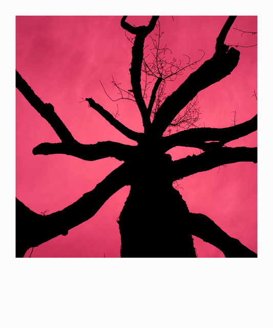 Frank Titze, Ulm/Germany - No. 3139 : Y 2015-05 - Red Tree - 533x640 Pixel - 168 kB