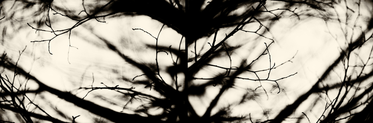 Frank Titze, Ulm/Germany - No. 3160 : Y 2015-05 - Diverged Branches - 960x318 Pixel - 221 kB