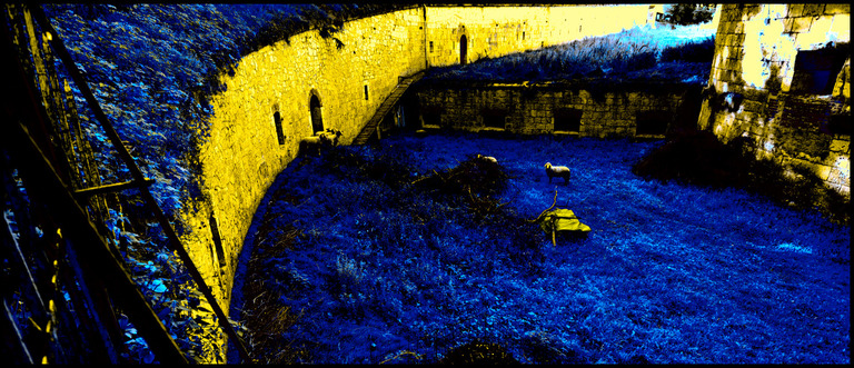 Frank Titze, Ulm/Germany - No. 362 : Fortress of Ulm - Five Sheep Visible and One Hidden - 960x413 Pixel - 346 kB