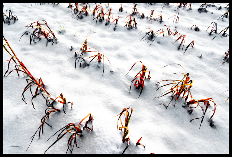 Frank Titze, Ulm/Germany - No. 4050 : Others V - Snow Field I - 947x640 Pixel - 659 kB