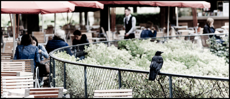 Frank Titze, Ulm/Germany - No. 5624 : Square 1:1 V - The Raven - ImageWidth : --- xImageHeight : ---  Pixel - 413 kB