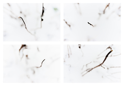 Frank Titze, Ulm/Germany - No. 3223 : Y 2015-05 - Out of White - 924x640 Pixel - 167 kB