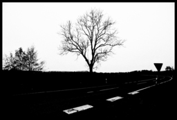 Frank Titze, Ulm/Germany - No. 723 : Trees I - On the other Side - 947x640 Pixel - 217 kB
