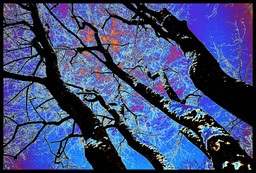 Frank Titze, Ulm/Germany - No. 931 : Trees I - Psychedelic Trees - 947x640 Pixel - 654 kB